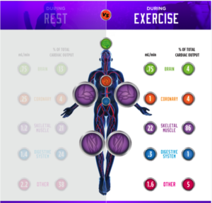 Blood flow exercise