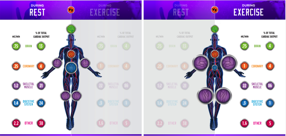 Blood flow rest & exercise